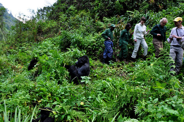 3 Days Gorilla Trekking in Bwindi