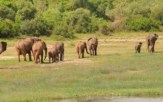 Aswa - Lolim Game Reserve