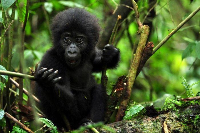 4 Days Gorillas and Wildlife safari