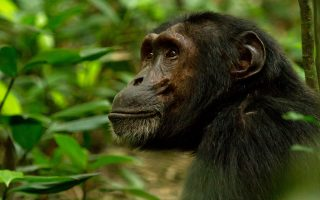 3 Days Kibale Forest