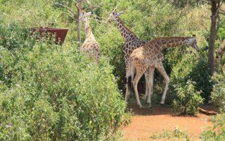 7 Days Kampala and Entebbe