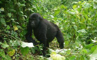 3 Days Rwanda Gorilla Tour