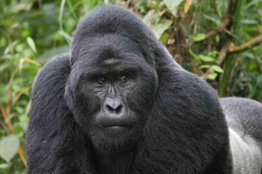 6 Days gorilla and rafting safari