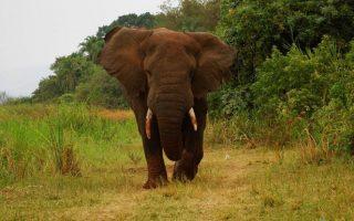 Tips for Wildlife Viewing in Rwanda