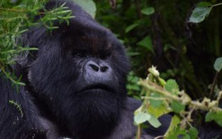 6 Days Rwanda Vacation Safari