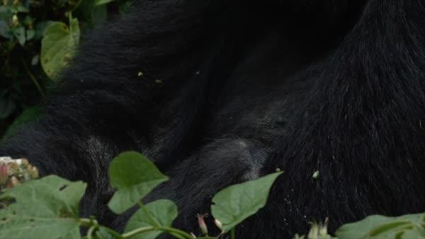 Nyakamwe Gorilla Group