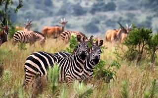 3 Days Lake Mburo National Park tour