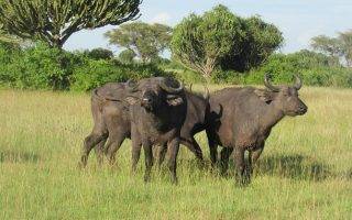 5 Days Kidepo National Park & Sipi Falls tour
