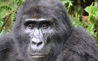 4 Days Bwindi Gorilla Trekking & Lake Bunyonyi tour