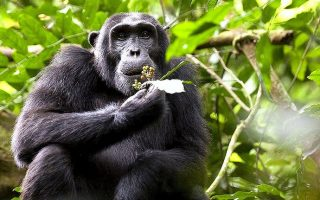 4 Days Murchison Falls Chimpanzee Trekking Tour