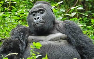 5 Days Uganda Primates & Wildlife Safari