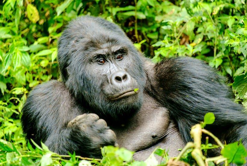 3 Days Uganda Gorilla Trekking