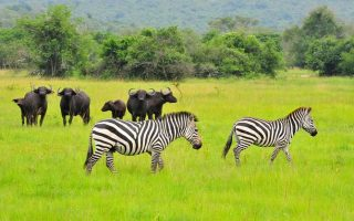 2 Days Lake Mburo National Park Tour