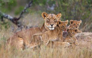 Uganda Wildlife Protected By UWA