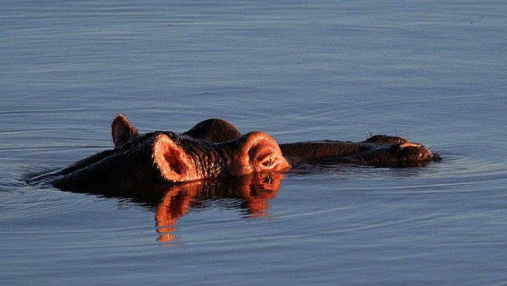 4 Day Queen Elizabeth Wildlife & Chimpanzee trekking safari