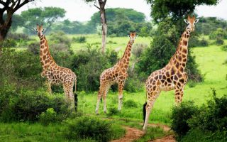 4 Days Murchison Falls Delta Cruise Safari