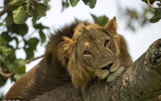 3 Days Queen Elizabeth National Park