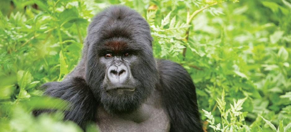 Best Season to Visit Uganda National Parks