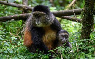 8 Days Uganda Rwanda Safari