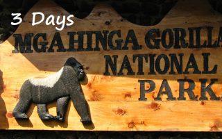 3 Days Mgahinga Gorilla Trekking