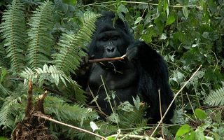 3 Days Mgahinga Gorilla Trekking Tour