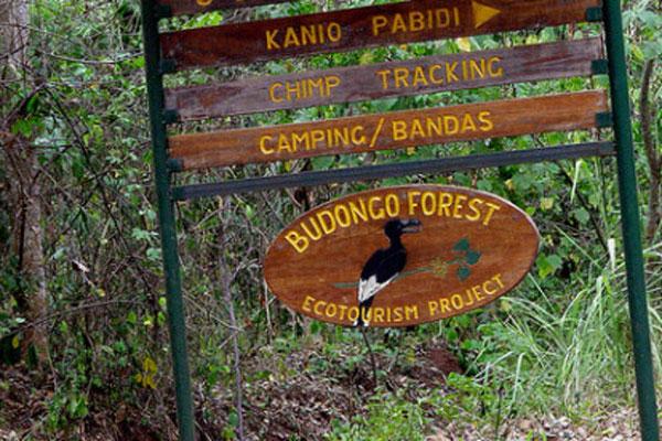 Birding in Budongo Forest