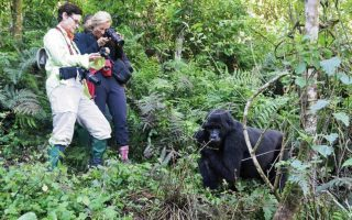 Essentials for Gorilla Trekking in Uganda
