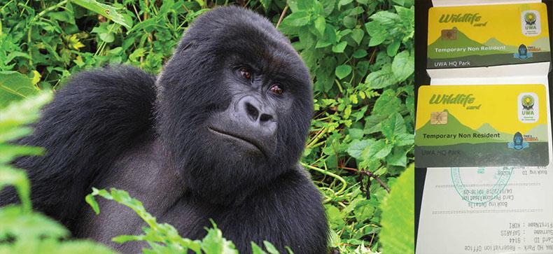 Gorilla Trekking Permit in Uganda