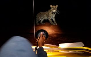 Night Game Drive Tours in Uganda