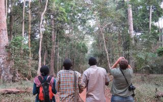 Birding in Budongo Forest