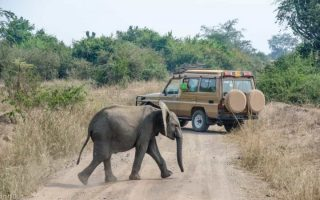 Game Drive & Game Viewing in Uganda