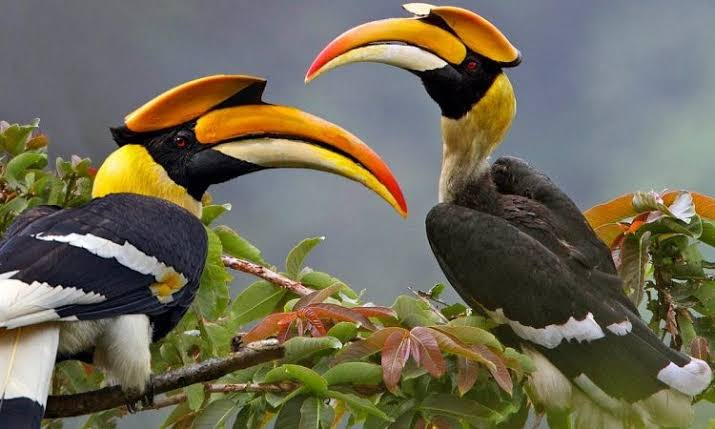 Best Birding Destinations in Uganda