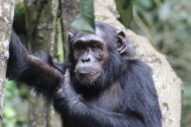 12 Days Kenya Uganda & Rwanda Safari