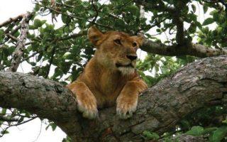 15 Days Uganda Classic Safari