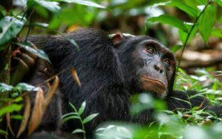 3 Days Kibale National Park tour