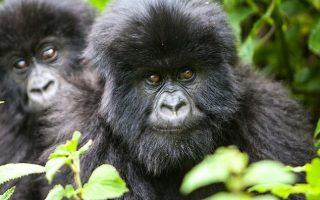 6 Days Uganda Gorillas & Wildlife tour