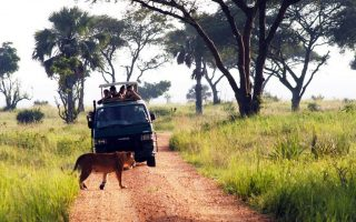 Activities in Murchison Falls National Park