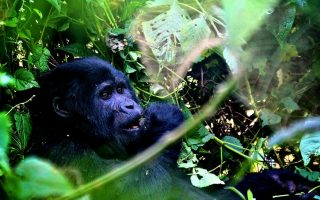 How long does Gorilla Trekking last?