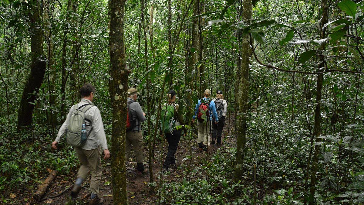 Attractions & Activities in Kalinzu Forest