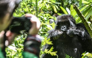 Gorilla Filming Safari in Uganda