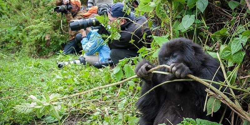 Gorilla Filming Safari in Uganda