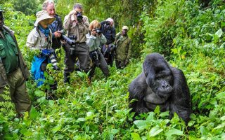 Gorilla Trekking Safety