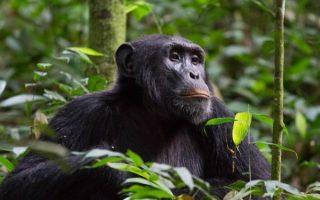 3 Days Rwanda Chimpanzee Tour