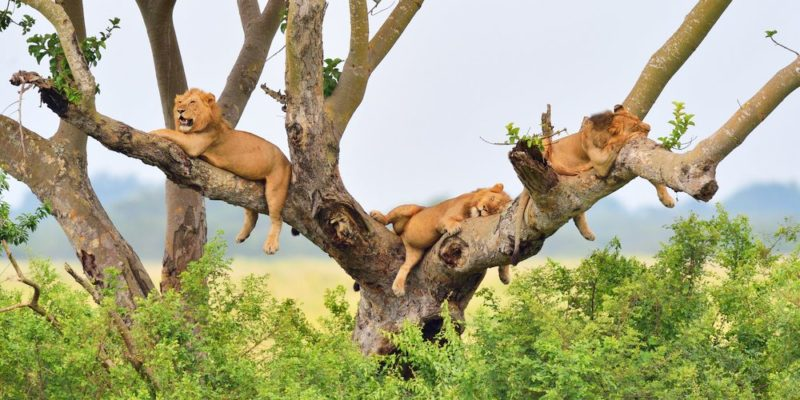 4 Days Queen Elizabeth Wildlife Safaris