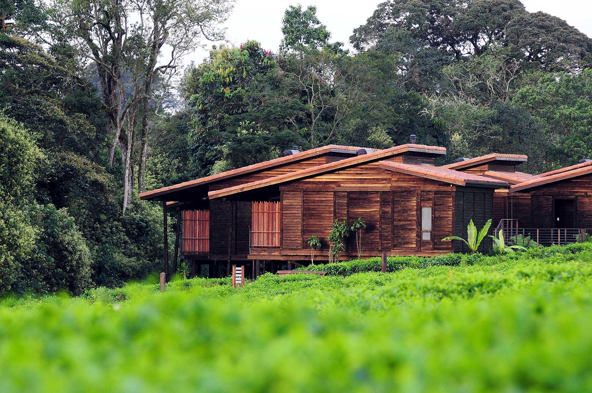 Tea tours in Rwanda