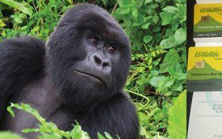 Uganda Gorilla Trekking Permit 2020/2022