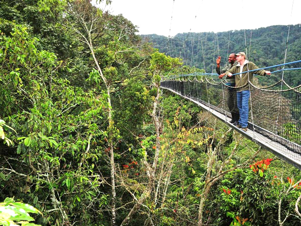 Activities in Nyungwe Forest National Park