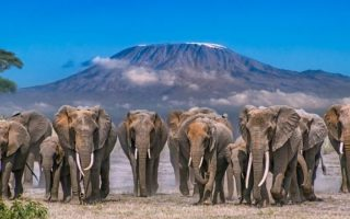 3 Days Amboseli Wildlife Safari