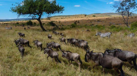 3 Days Fly in Masai Mara Safari