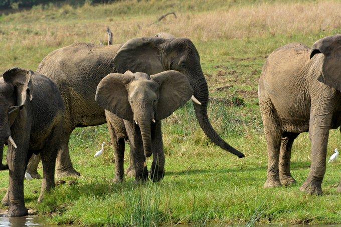 5 Days Jinja and Murchison falls Safari